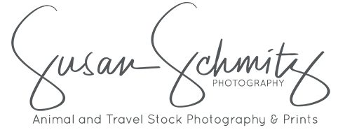 Susan Schmitz Photography Stock
