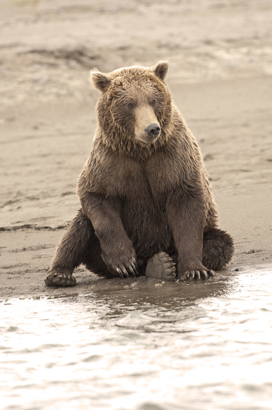 Brown Bear Beach Seat Vertical
