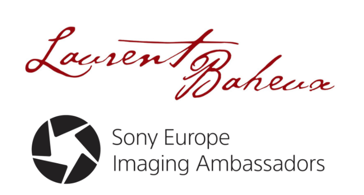 Logo Laurent Sony 2