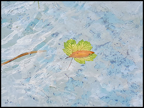Leaf_on_Water_2_small.jpg