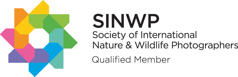 SINWP-Qualified-Member---Black-Text.png