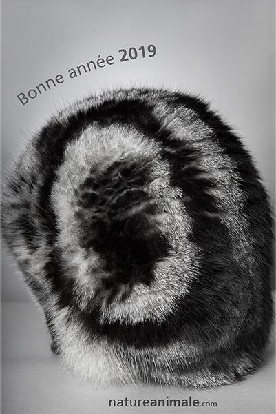 BonneAnnee_2019.jpg