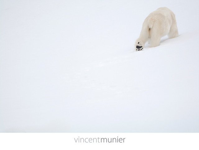 Photo de Vincent Munier
