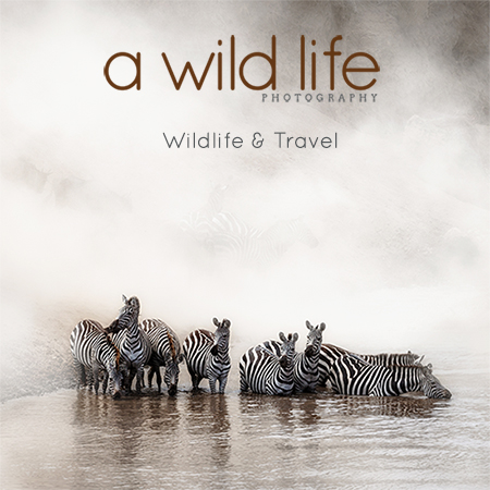 A Wild Life Photo Website