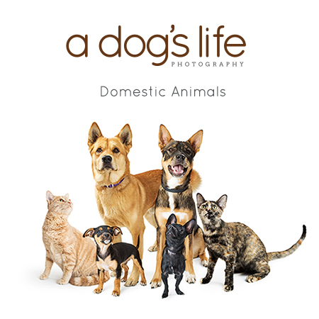 A Dogs Life Photo Website