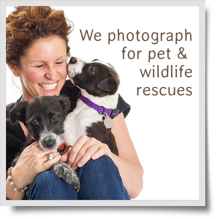 We Photograph For Rescues