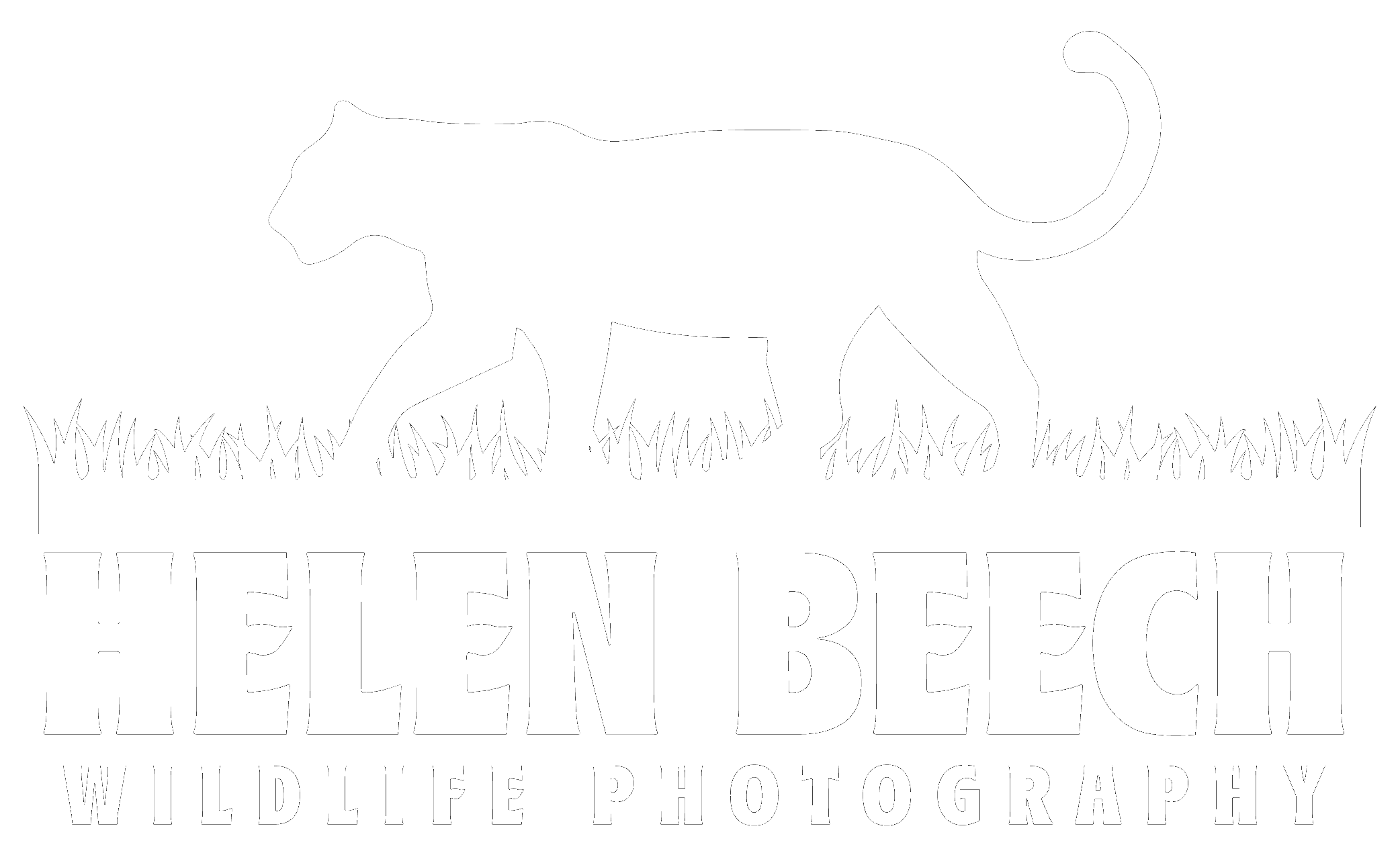 Helen Beech Wildlife Photography 01 White
