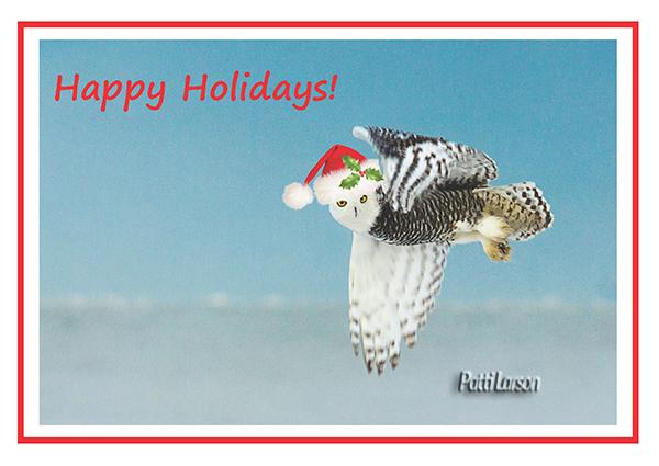 Snowy_Owl_Christmas_Card_Front_lr.jpg