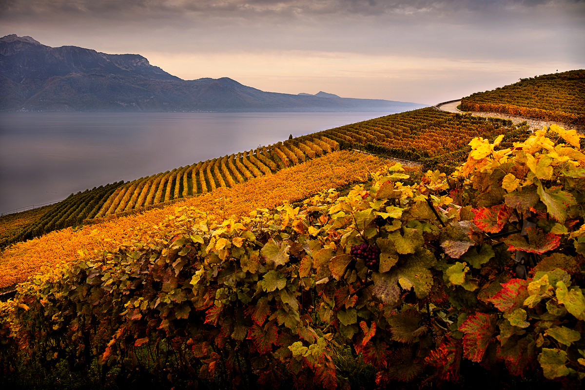 Workshop Lavaux Vignes