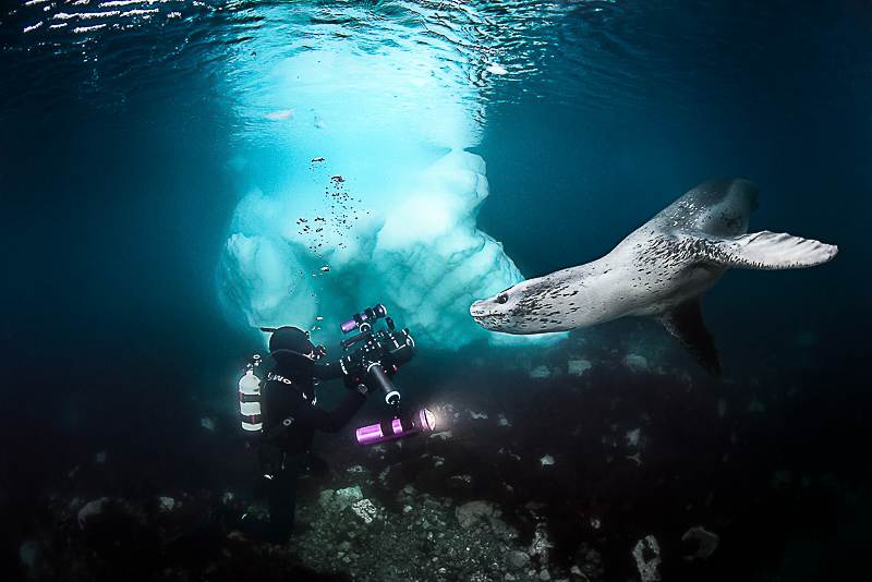 Antarctica Diving With Leopard Seal