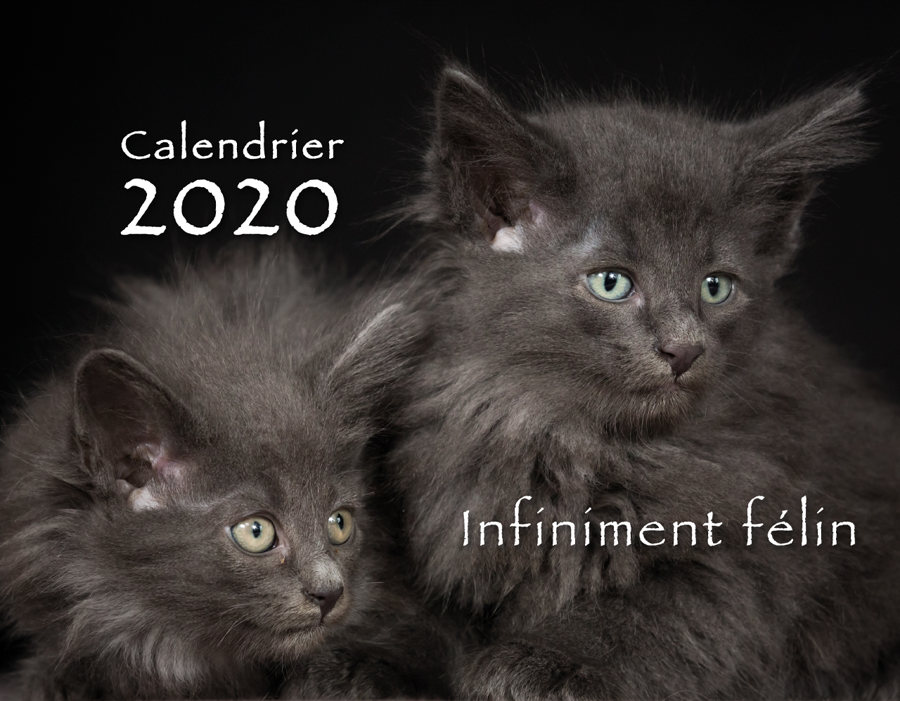 Calendrier Chat 2020.Calendrier 2020 Chats Photo Alain Thimmesch