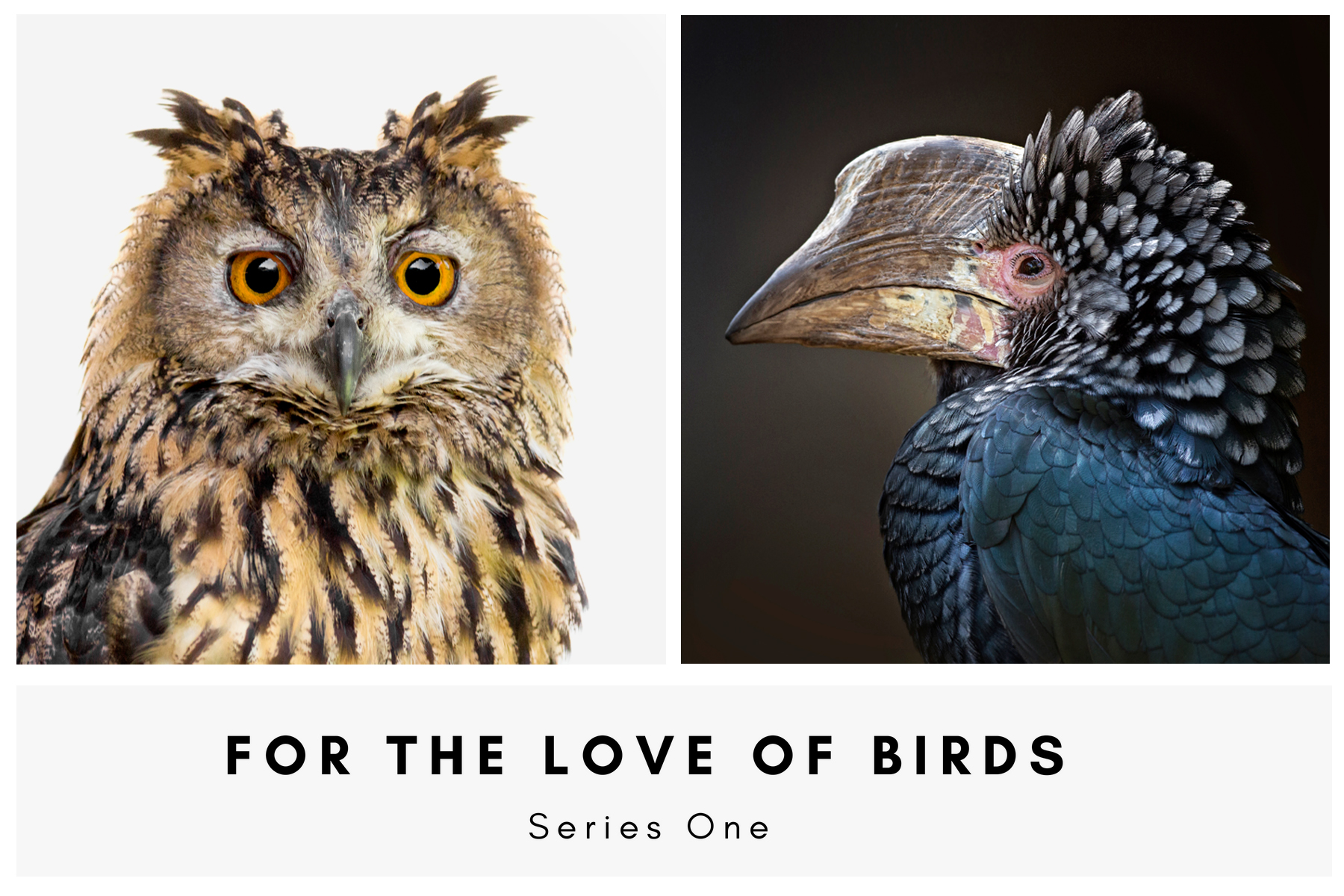 For The Love Of Birds Banner001