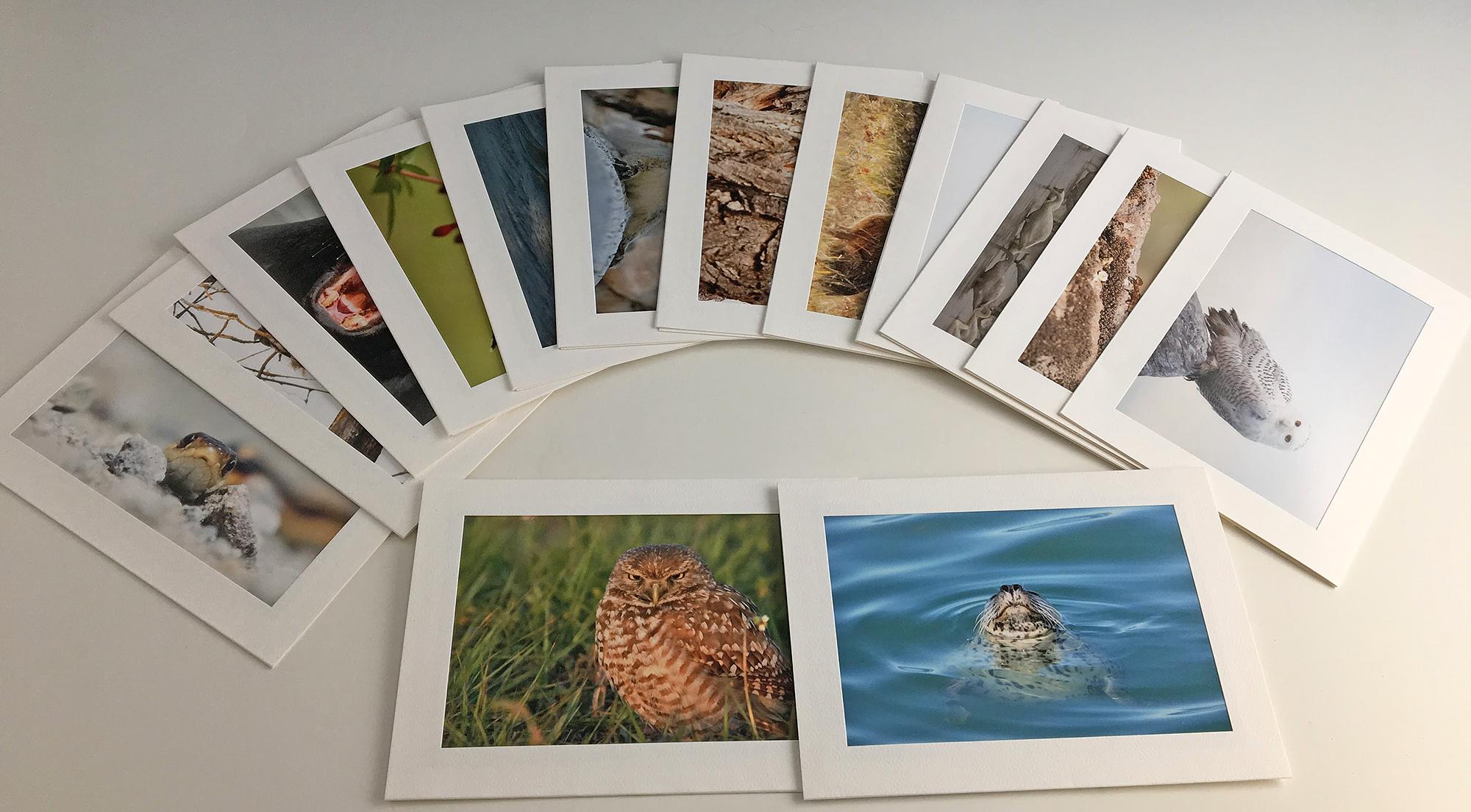 Greeting cards dan elster photography primg2955bg primg2953g kristyandbryce Gallery