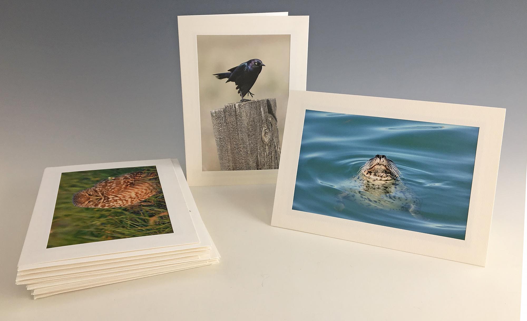 Greeting cards dan elster photography primg2955bg primg2953g primg2945g kristyandbryce Gallery